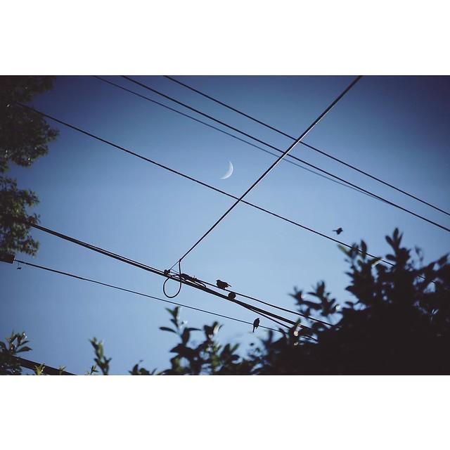 Exploring my backyard. #4.  Grosse Pointe, Michigan.  Sony a7mII #VSCOcam #suburbs #backyardseries #sonya7II #SonyImages #minimal #moon #birds