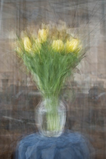 tulips in the round | by Stephen D'Agostino