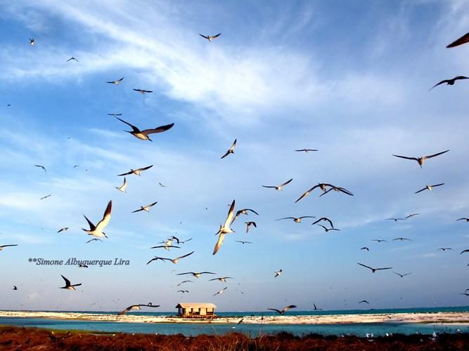 Atol das aves...