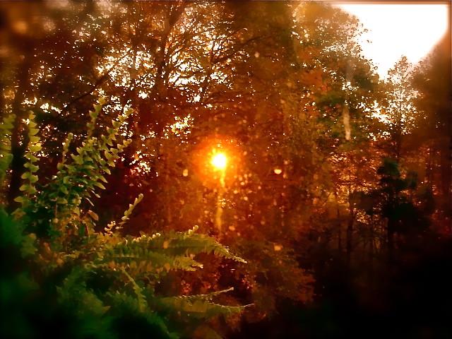 gary scott autumn sunrise