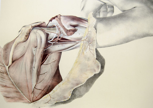 Dissection of the shoulder | by liverpoolhls