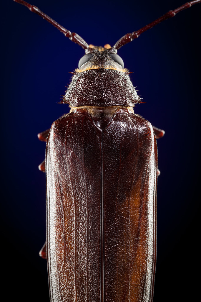 Some Giant-Ass Bug 8710