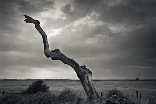 Trees die standing | by p_v a l d i v i e s o