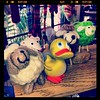"""@GeoDuckie with Sheeps in """"Really Knit Stuff"""" Tally, Fla Missing #ShauntheSheep"""