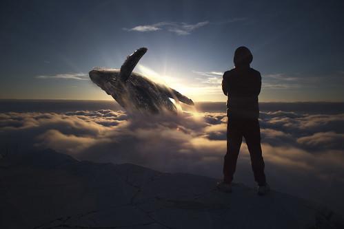balena tra le nuvole