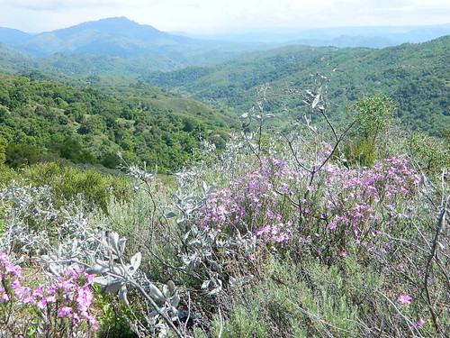 Wildflowers of the Santa Lucia Mountains