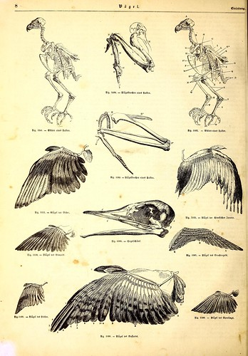 n21_w1150 | by BioDivLibrary