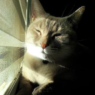 #Catgirl #Söndag enjoying the sun while watching the #birds outside. ♥ #pet #cat #catsofinstagram #catstagram @imsondag | by Reavel