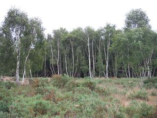 Stoke Common SWC Walk 189 Beeches Way: West Drayton to Cookham