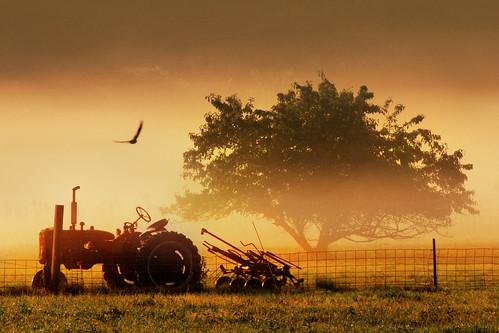mist tractor bird birds misty fog sunrise ma farm massachusetts foggy newengland farms sunrises elliot tractors ferme stow foggyday fermes stowma gilfix newenglandsunrise elliotphotos elliotgilfix