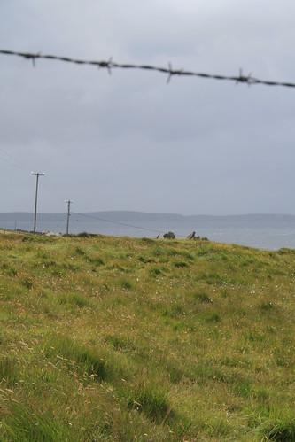 ireland fence wire view barbedwire countymayo