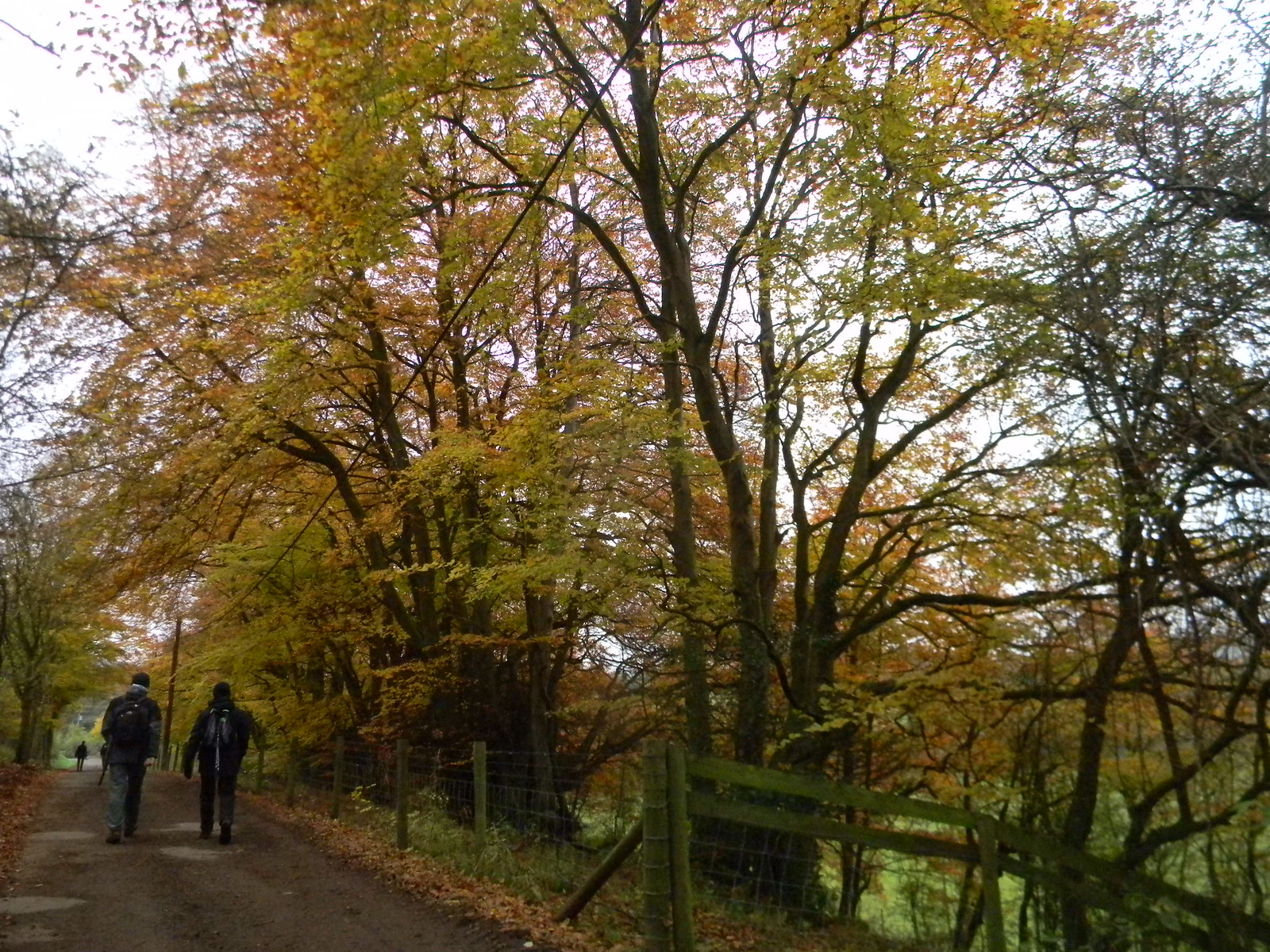Autumn colour 1 Little Kimble to Saunderton