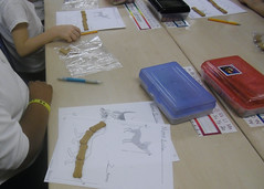 Using non-standard units reveals whether students understand the basic steps involved in measuring length - where to begin and end the line of measurement and leaving no gaps or overlaps between units. (March 2012, Gr K)