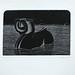 """Swan Horse!?"".  Xilogravura/Woodcut, 1992."