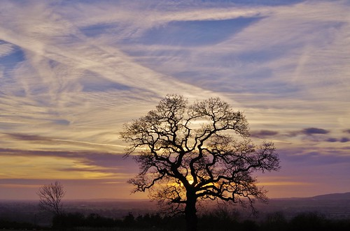 tree silhouette sky clouds lines shropshire sunrise light blue white countryside pentax pentaxart