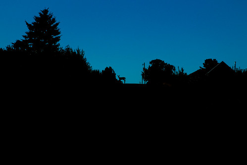 morning silhouette deer fujixe1