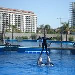 Oceanografic Miguel, delfines 03