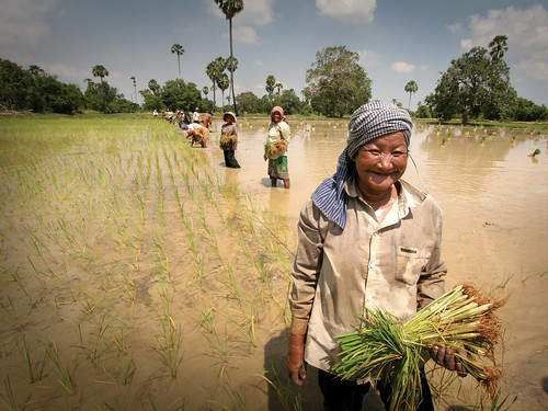Cambodia - Working in the rice paddies | by DFAT photo library