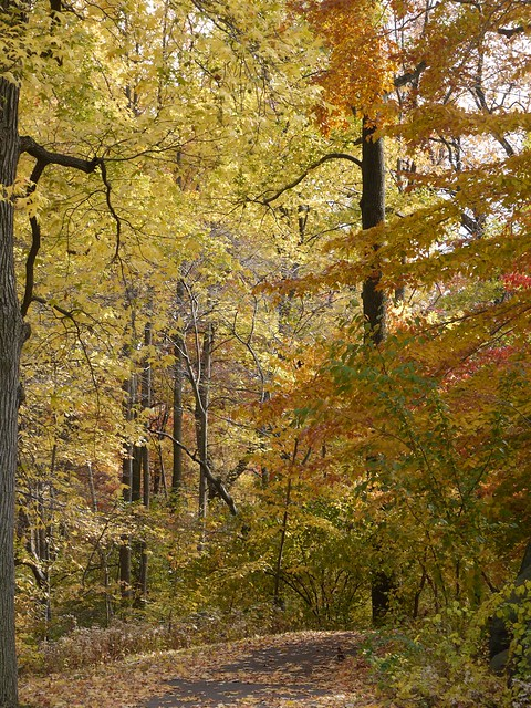 日, 2013-11-03 12:40 - Bronx Botanical Gardenの紅葉