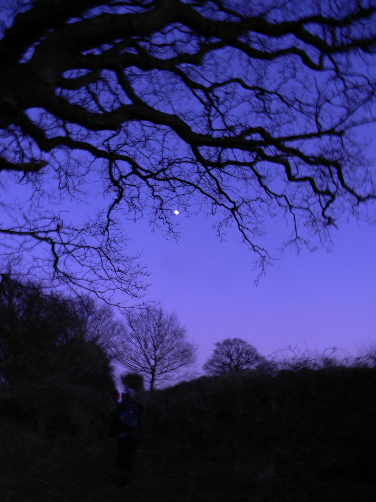 Dusk scene with moon Appledore Short Circular