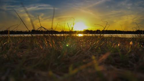sunset grass week16 lighroom lakenormannc ramseycreekpark canon60d bugspointofview 16of52 terridoaktaylor