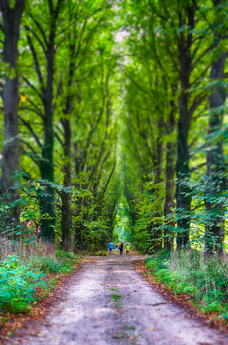 trees people landscape woods mystical fairyland hdr