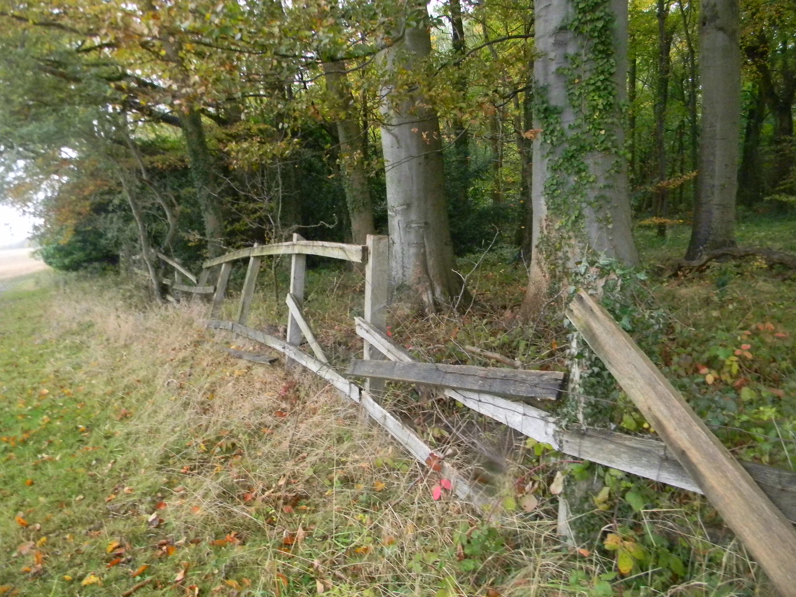 Broken down fence Chorleywood to Chesham