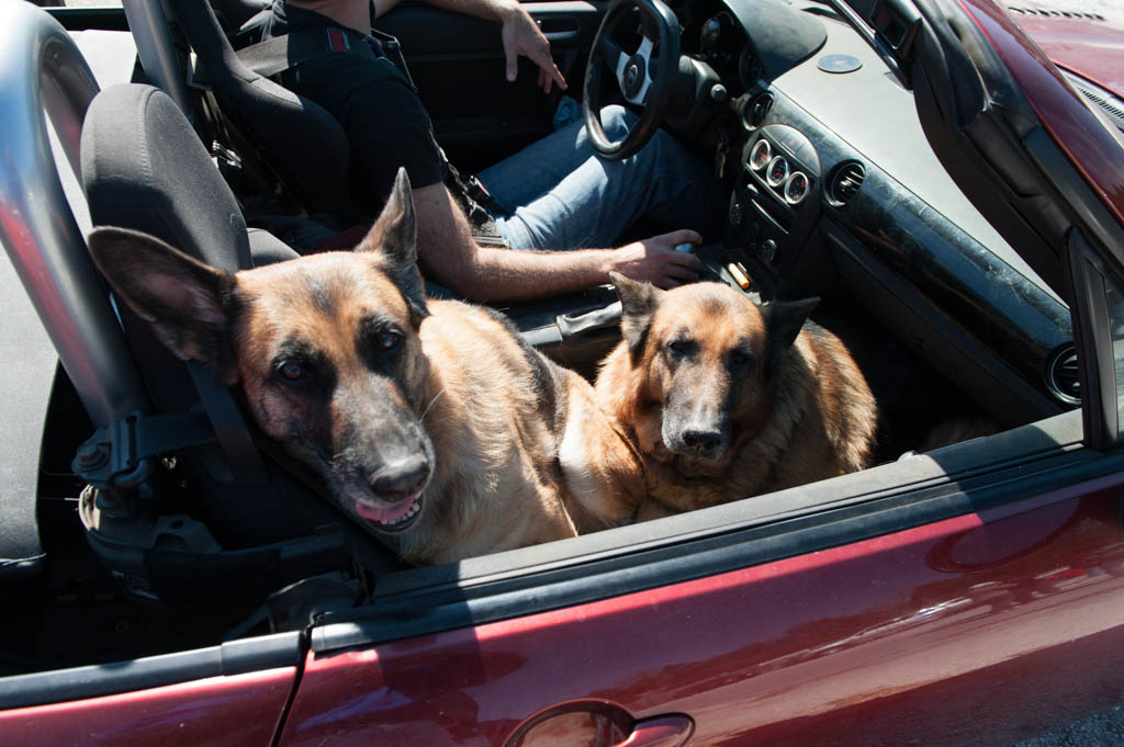 Premise Indicator Words: How To Fit Two German Shepherds In An MX-5
