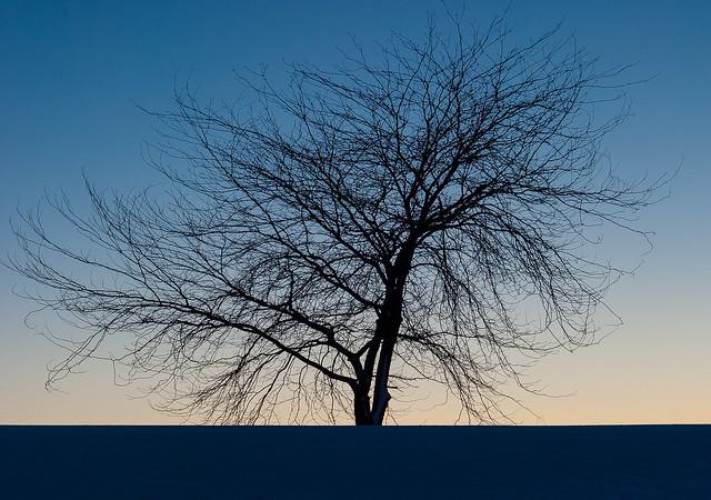 Lonely tree. Homage to Piet Mondrian