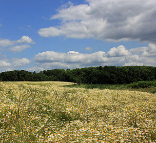 Sharphill sky scape | by Guy R