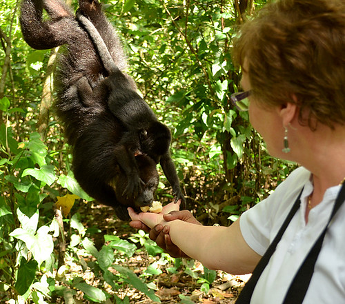 Community Baboon Sanctuary -Joe-5 | by KathyCat102