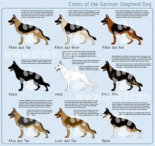 German Shepherd Colors | by DFDK9