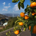 Mandarin orange island