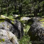 06 Viajefilos en Australia. Cathedral Rock NP 23