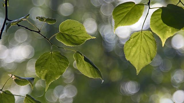 expecting the green season
