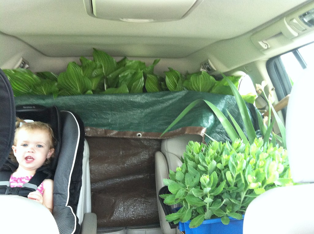 hauling plants and babies
