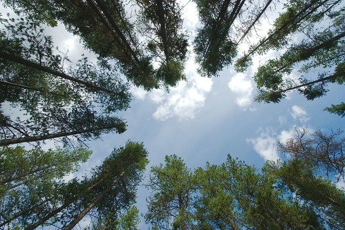 Looking up at the sky   by Sébastien Launay