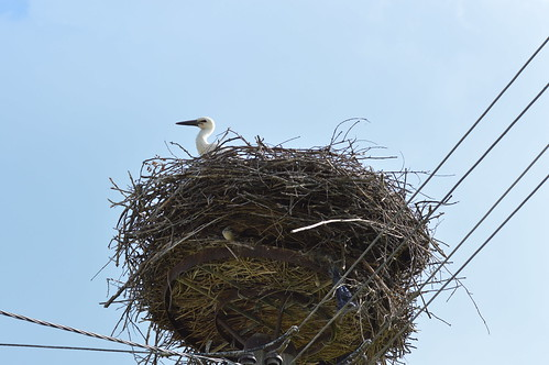 Stork nest | by Angelo Hulshout