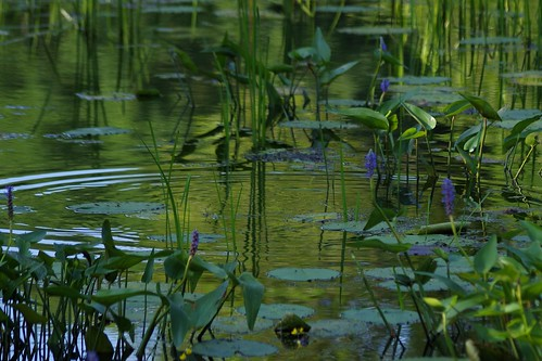 park reflection green water reeds landscape pond pentax connecticut newengland ct vista pickerelweed k3 2014 southfordfallsstatepark vbd smcpentaxda55300mmf458ed summer2014