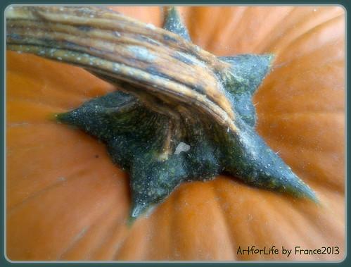 C comme Citrouille. ~P like pumpkin.