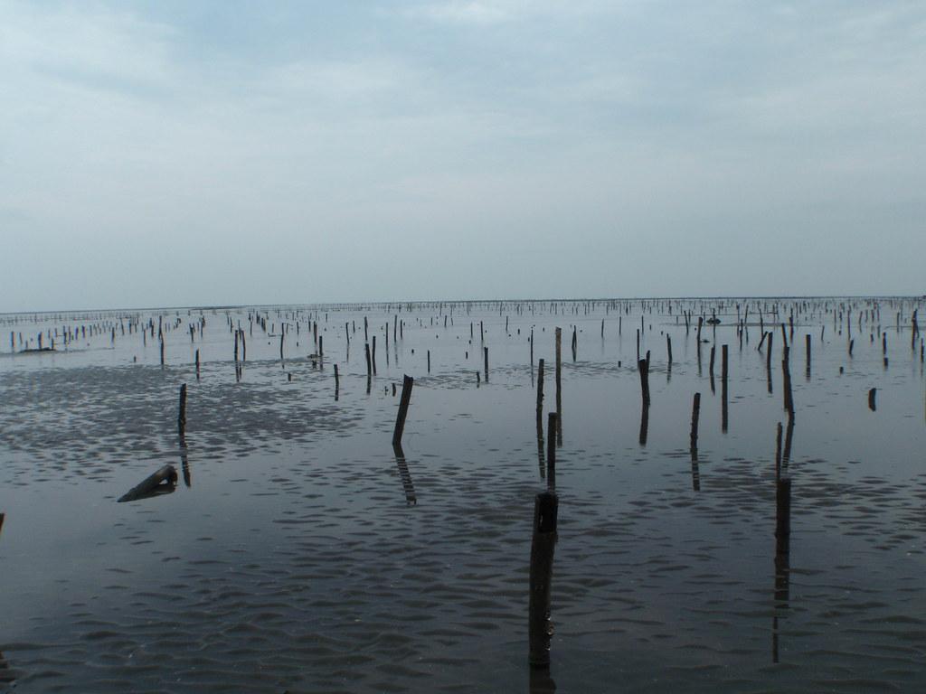 苦等十年 彰化海岸仍等無「國際級重要濕地」身份。照片提供:彰化海岸台灣濕地學會