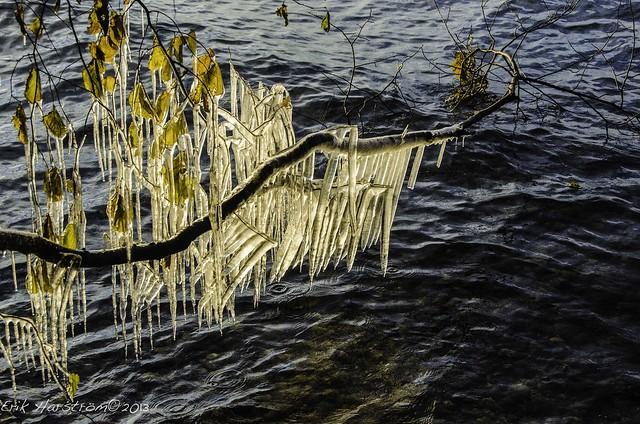 erikharstrom-autumn 2013-8086