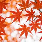 Color of Heianjingu