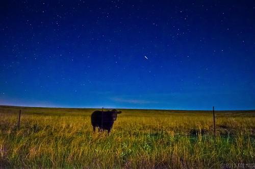 blue beautiful night rural dark stars landscape star cow cattle florida country agriculture shootingstar waukeenah thephotographyblog kylepmillerphotography