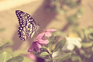 Butterflies are self propelled flowers. ~ R.H. Heinlein | by VinothChandar