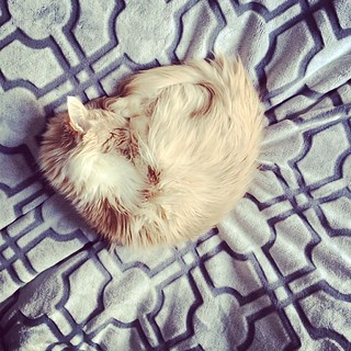 Snoozer  #catsofinstagram | by Just Shireen