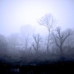Fog, River Lea
