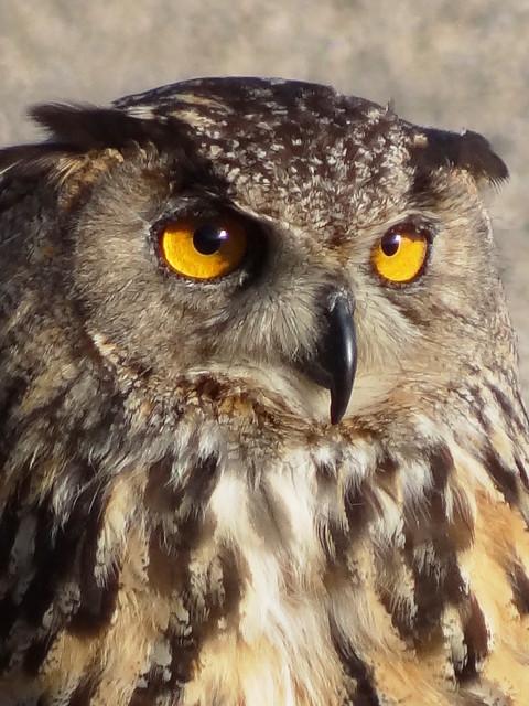 A me gli occhi......please! ;-))