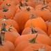 Pumpkins by Joe Shlabotnik