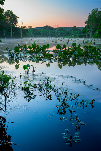 morning blue trees red summer sky orange lake color reflection green nature water vertical sunrise landscape outdoors us twilight unitedstates nobody clear westvirginia swamp vegetation marsh lilypads pointpleasant masoncounty mcclintock tntarea